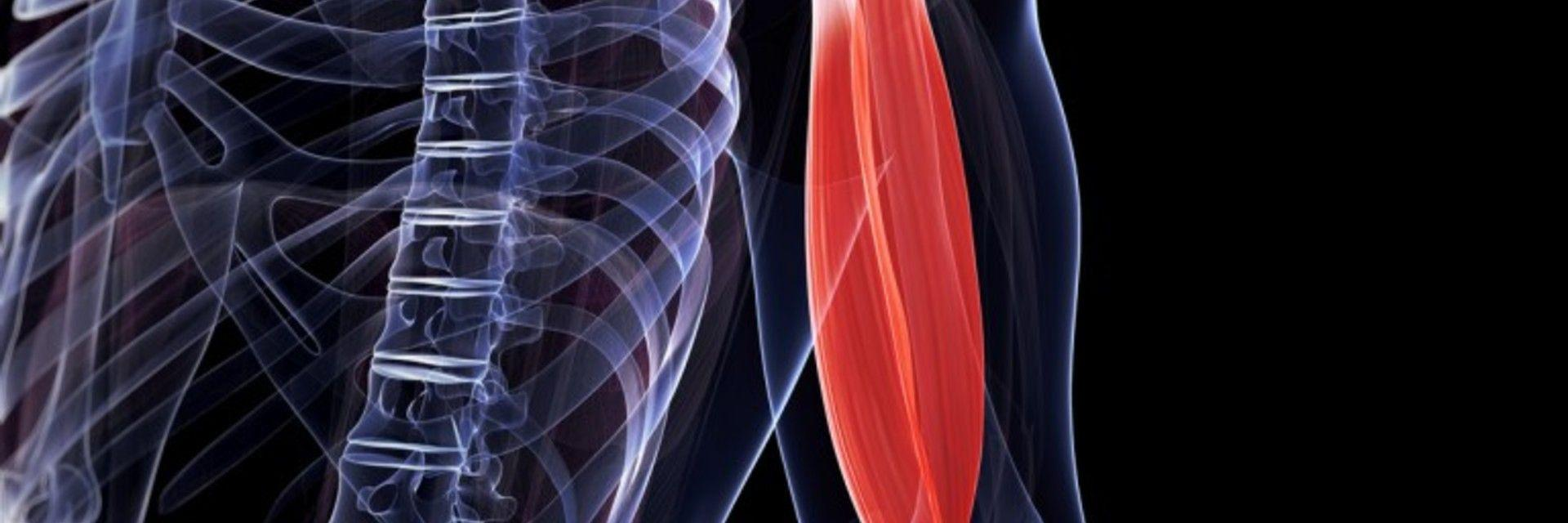 Get the Facts: Biceps Tendon Rupture